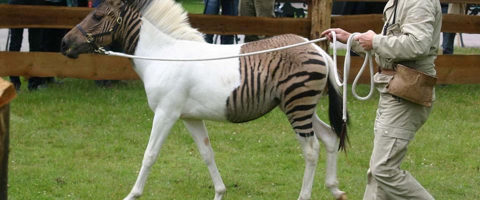Доклад о гибридах животных 3043