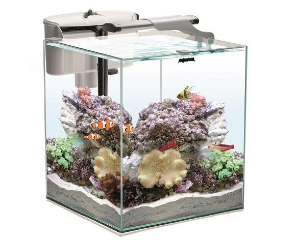 Как выбрать аквариум для дома